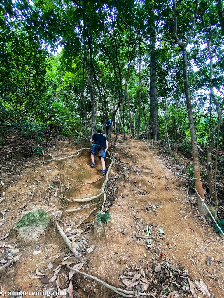 A man climbing up a steep ascend on a jungle trail