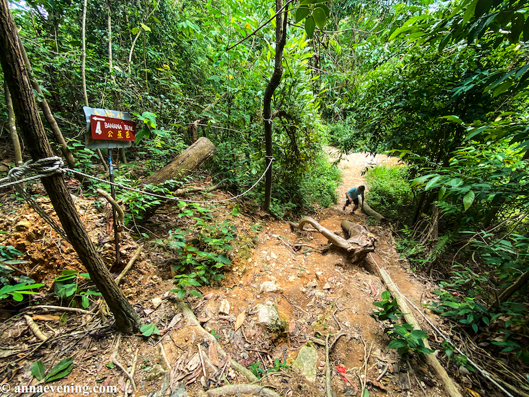 A jungle trail with a red sign that says Banana Trail