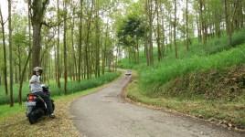 Jalan dari Coban Rondo, sejuk dan asri.
