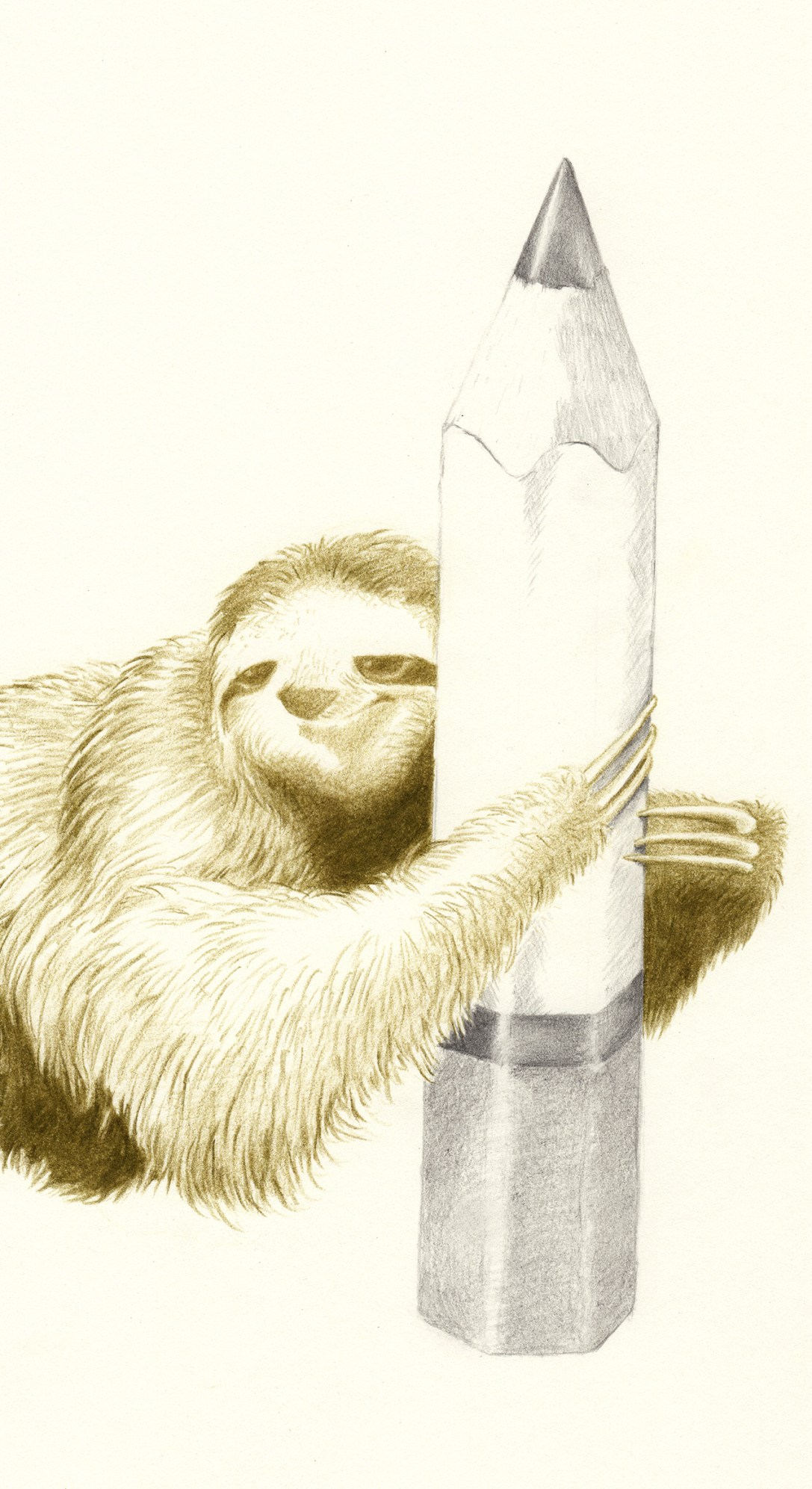 SLOTH I | pencil on paper