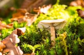 Little Mushrooms in the Sun