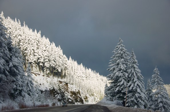 Mt.Hood national forest