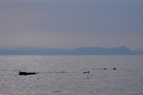 Early morning Dolphin watching