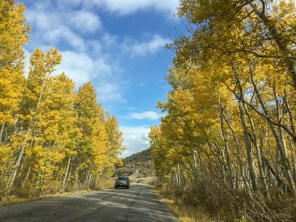 Fall colors along June lake loop