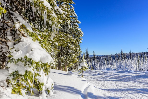 Trees at lower elevations in Targhee