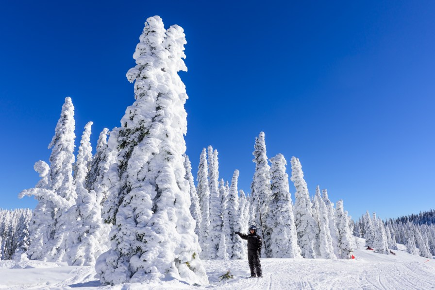Snow ghosts of Targhee national forest