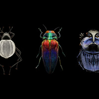 Insects on a black background