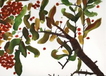 rowanberry watercolour painting