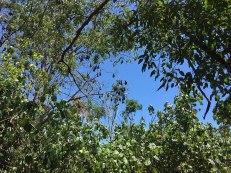 pipistrelli a Hervey Bay (foto: Anna Luciani)