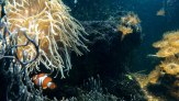 Nemo. Aquasearch Aquarium (foto: Anna Luciani)