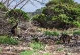 kangaroo-island-76