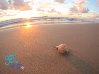 Dawn Shell