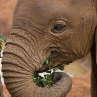 12 Things You Might Not Know About Elephants