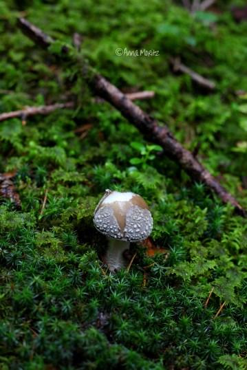 star mushroom :)