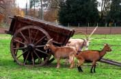 The Farm, Queen's Hamlet, Versailles