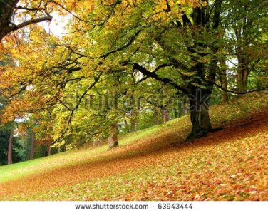 stock-photo-autumn-in-the-park-of-castle-ambras-63943444