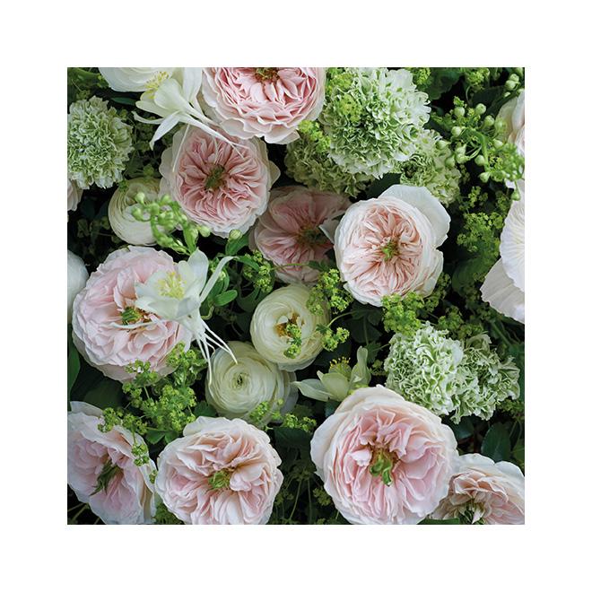 David Austen charity rose