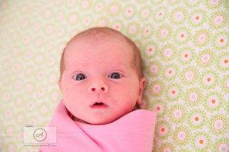 Newborn Photography AnnaOsetroff Newborn Photographer Brisbane