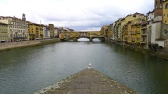 Bird in front of Ponte Vecchio