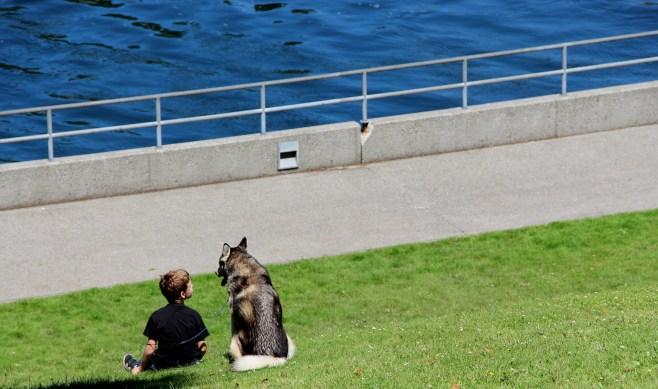 The dog and his boy // Le chien et son garçon