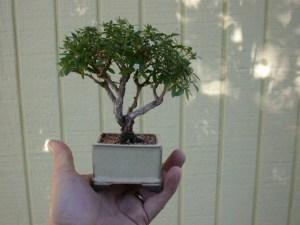 tiny-tree