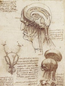 susan-starr-brain