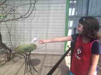 Toledo Zoo Keet Retreat Her First Hungry Parakeet