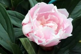 blommor_stugan 002