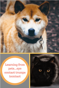 Learning from pets