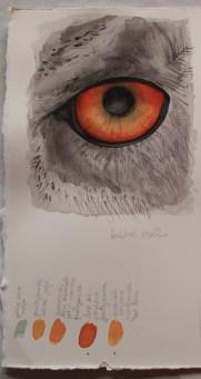 Owl eye - watercolour practice