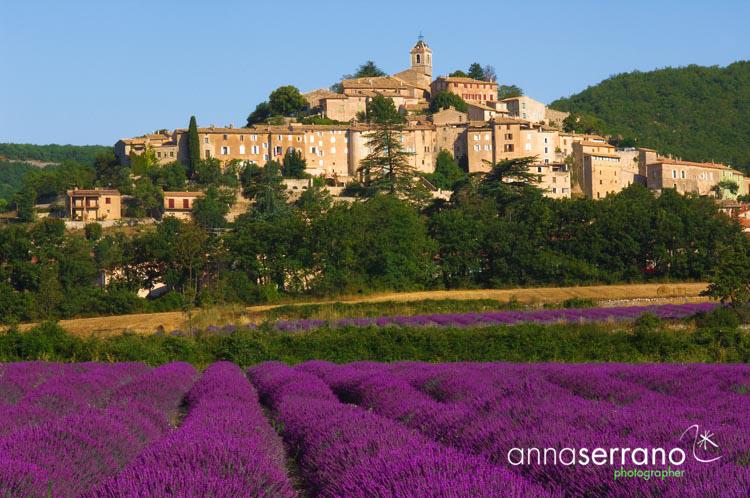001-F-Provence-Lavender-0148_1