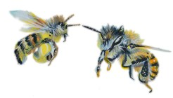 Honey Bees are often painted as wasps or pests in most garden art https://www.kickstarter.com/projects/ryanfalenlee/rivendell-apiaries