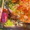 郷愁を誘う晩秋のコントラスト。大秘境グンマーの深紅葉が見頃|甘楽郡南牧村「黄檗宗 黒瀧山不動寺」。