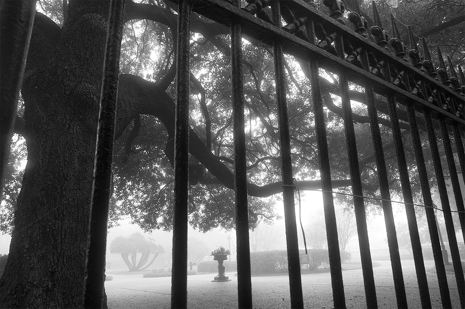 Jackson Sq Fog 1 web