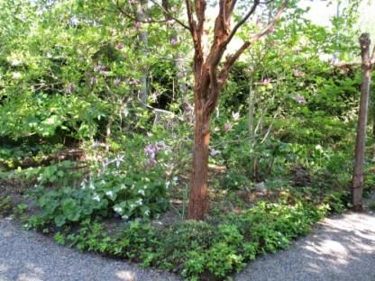 Magnolialandet där magnoliorna nästan är överblommade