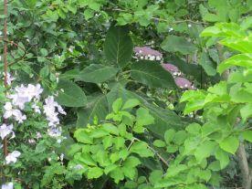Magnolialunden med andra blommor