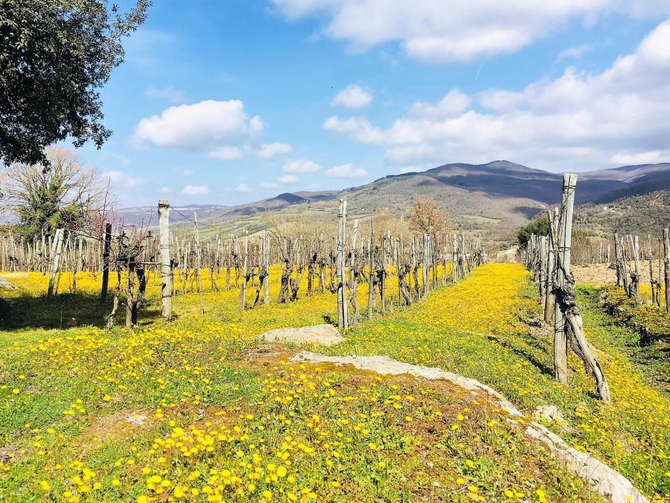 Drømmer du om å nyte varm sol, god mat og vin på vingårder der druene har sin opprinnelse? Da anbefaler jeg at du tar en vinreise til Italia. Kanskje blir du med meg på tur til mitt vinparadis?