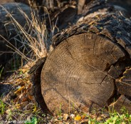 I liked the way the bark is just falling off this log. Some logs had already lost their bark.