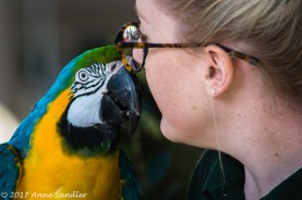 I love the connection between the parrot and trainer.