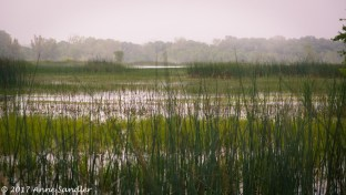 Wide angle view of the marsh.