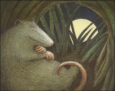 Possum sleeping