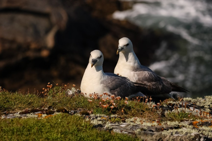 Photo of birds taken by a client of Anne Johnston