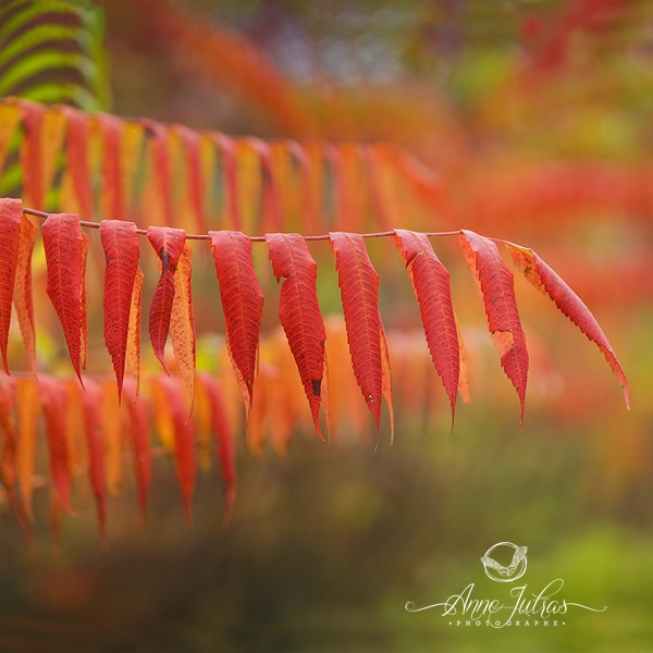 Bokeh - Belles photos d'automne