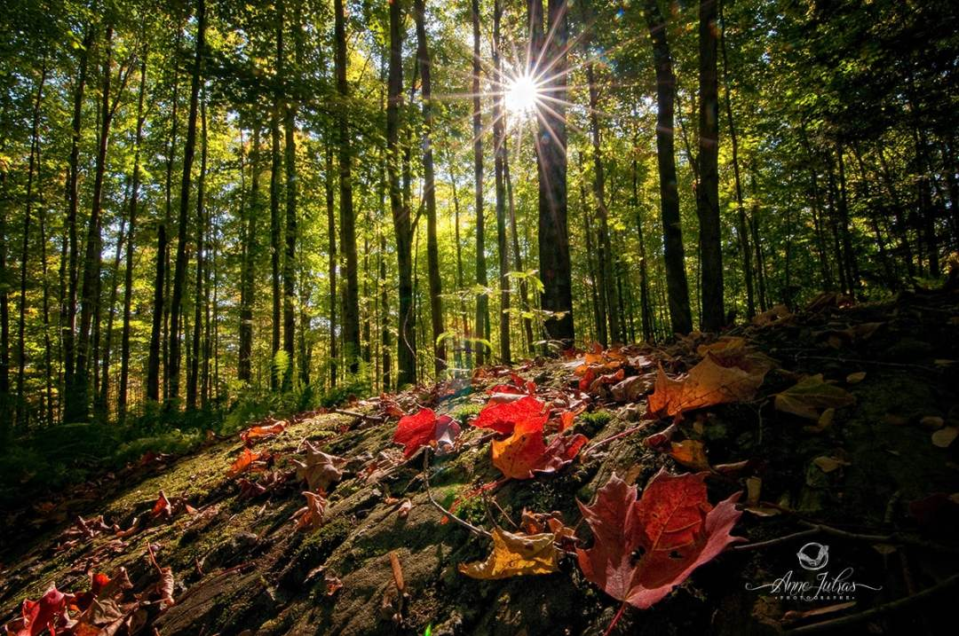 Changez votre point de vue - Belles photos d'automne