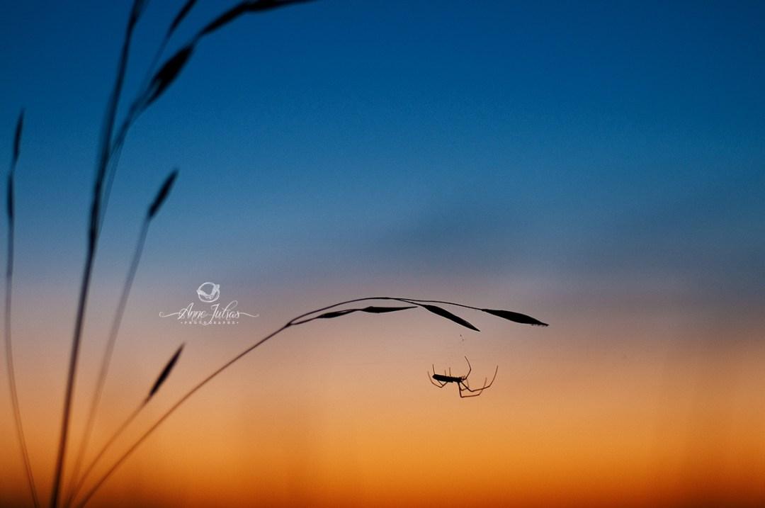 photographier coucher de soleil