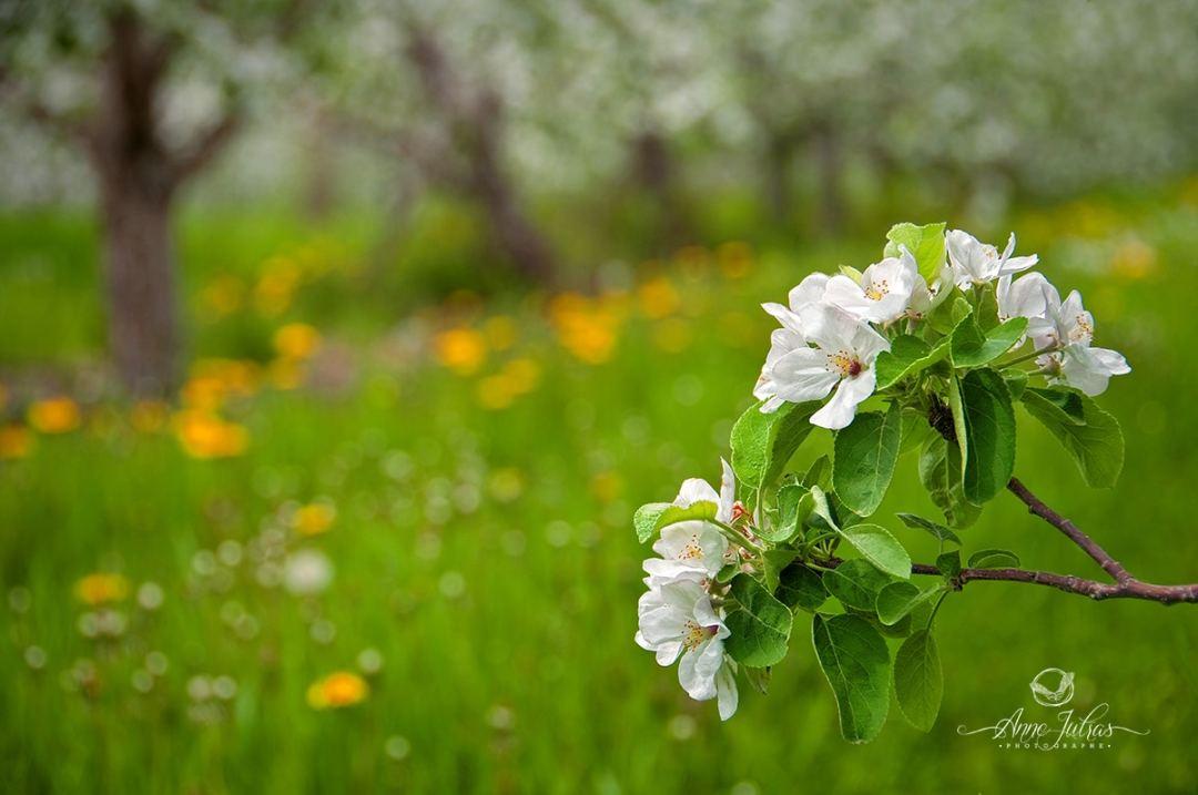 photos de fleurs