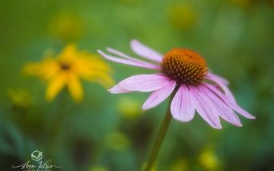 Photos de fleurs : 12 Astuces pour Immortaliser leur Beauté