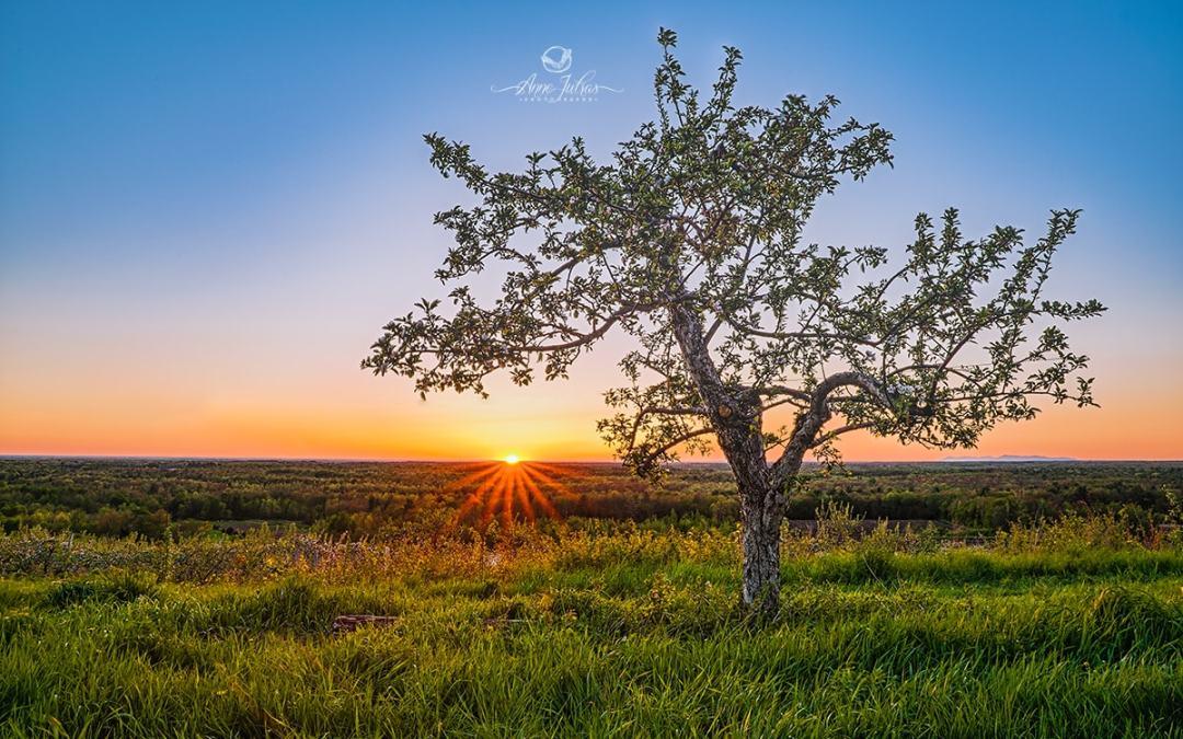 Coucher de soleil : pourquoi les attentes peuvent nuire à notre vision
