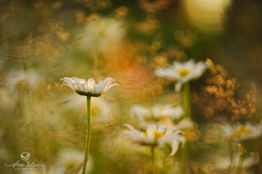 Photographie zen par Anne Jutras, artiste photographe
