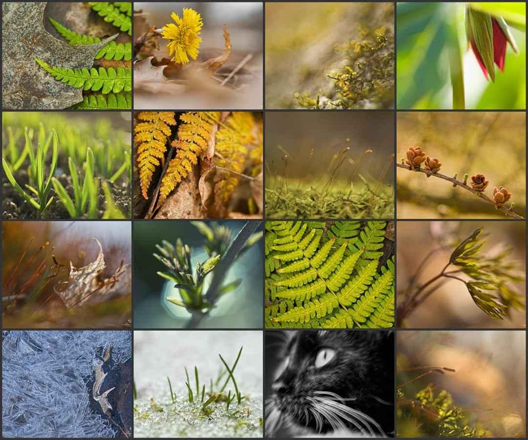 Entreprendre un Défi Photo, par Anne jutras | Idée photo | Conseils photo | Créativité | Photographie